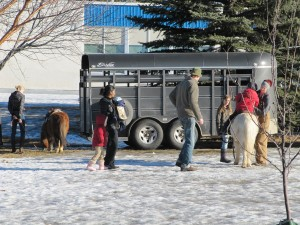 Richmond Horses